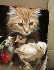 Cat-Birds